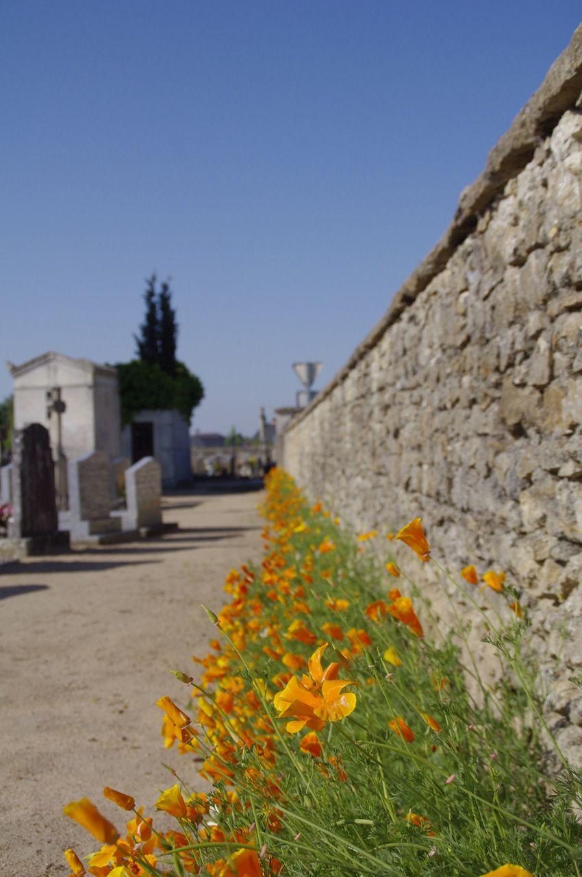 cimetière Mazé
